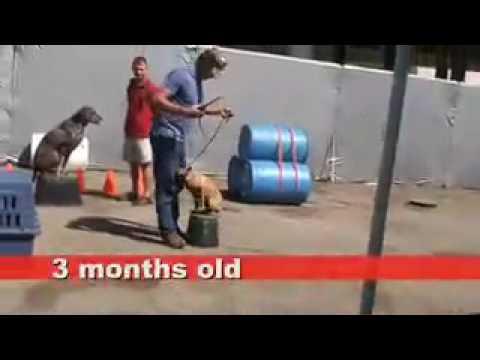 LOS ANGELES DOG TRAINING  |  Los Angeles dog trainers