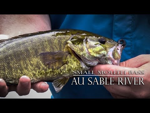 River Fishing Small Mouth Bass | Au Sable River