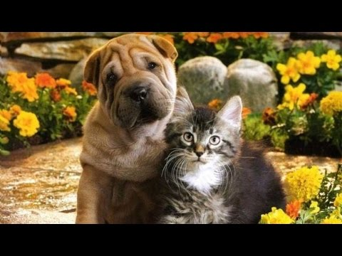 Dogs and Cat Love