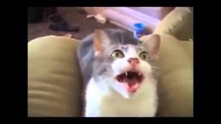 Говорящие кошки и другие поющие звери. *Приколы*.(Смешное видео о говорящих и поющих кошках, птичках и других животных. Композиция