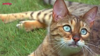 Kediler Hakkında 18 Yanlış Bilgi
