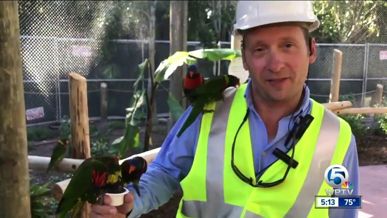 Lorikeet Exhibit Opens At The Palm Beach Zoo - YouTube