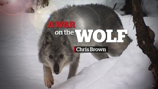 Wolf cull in B.C. | A War on the Wolf
