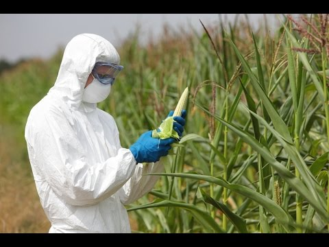 You'll Think Differently About GMOs After Listening to This Farmer!