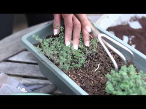 How to Use Coffee as Soil Fertilizer : Fertilizer & Gardening