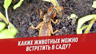 Каких животных можно встретить в саду? - Хочу всё знать