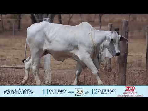 LOTE 173A