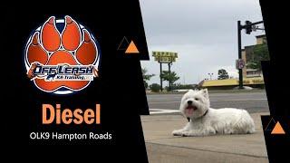 Westie 'Diesel' l Awesome Transformation l Dog Training Hampton Roads