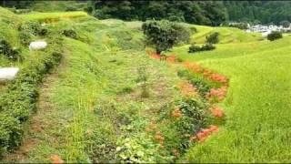 江里山の彼岸花