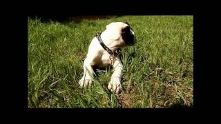 Puppy Training Pads: Cute Puppy Speaks About The Basic Puppy Pad Training Experience!
