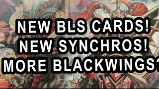 NEW BLS CARDS! NEW SYNCHROS! MORE BLACKWINGS?