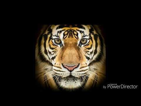 Tiger Dance sandal dhol mix with staring on mix DJ krishna