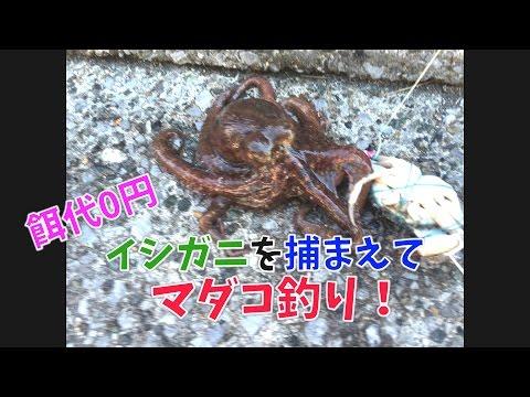�餌代】イシガニを���� マダコ釣り��0円】