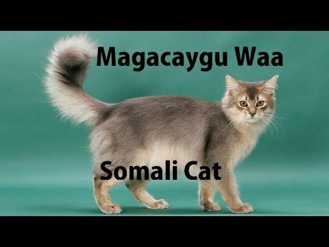 10 Xayawaan oo Soomaalida Loogu Magac Daray