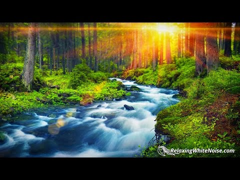Forest River Peaceful Sounds for Relaxation, Sleep or Studying | White Noise Nature 10 Hours