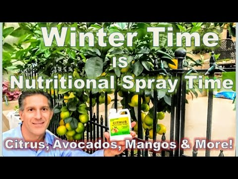 Citrus, Avocado & Mango WINTER-TIME Nutritional Spray | Repel Starving Rodents From GIRDLING Trees