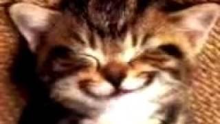 Kucing nyanyi lagu happy birthday to you😻