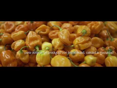 Vive Agro vegetales listos para consumir