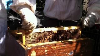Jardin du Luxembourg - Visite d'une ruche