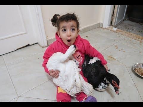 مريم لعبت مع البطة وعضتها من رسها شوف اللي حصل