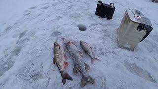 Омут полон рыбы Зимняя рыбалка на жерлицы и безмотылку