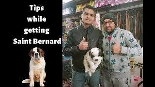 Pet Care   TIPS WHILE GETTING SAINT BERNARD DOG   PUPPY   BholaShola   Harwinder Singh Grewal