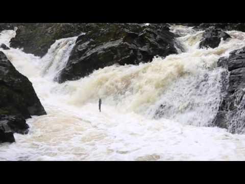 Winter Salmon Run, River Dee, Scotland