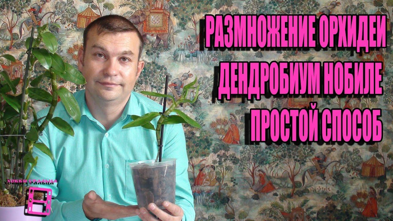 Киевский форум любителей орхидеи, уход за орхидеями, фаленопсисы, катлея,фаленопсис, дендробиумы, болезни орхидей, киевский клуб любителей орхидей, все про орхидеи, все для орхидей, фотографии орхидей, как ухаживать за орхидей.