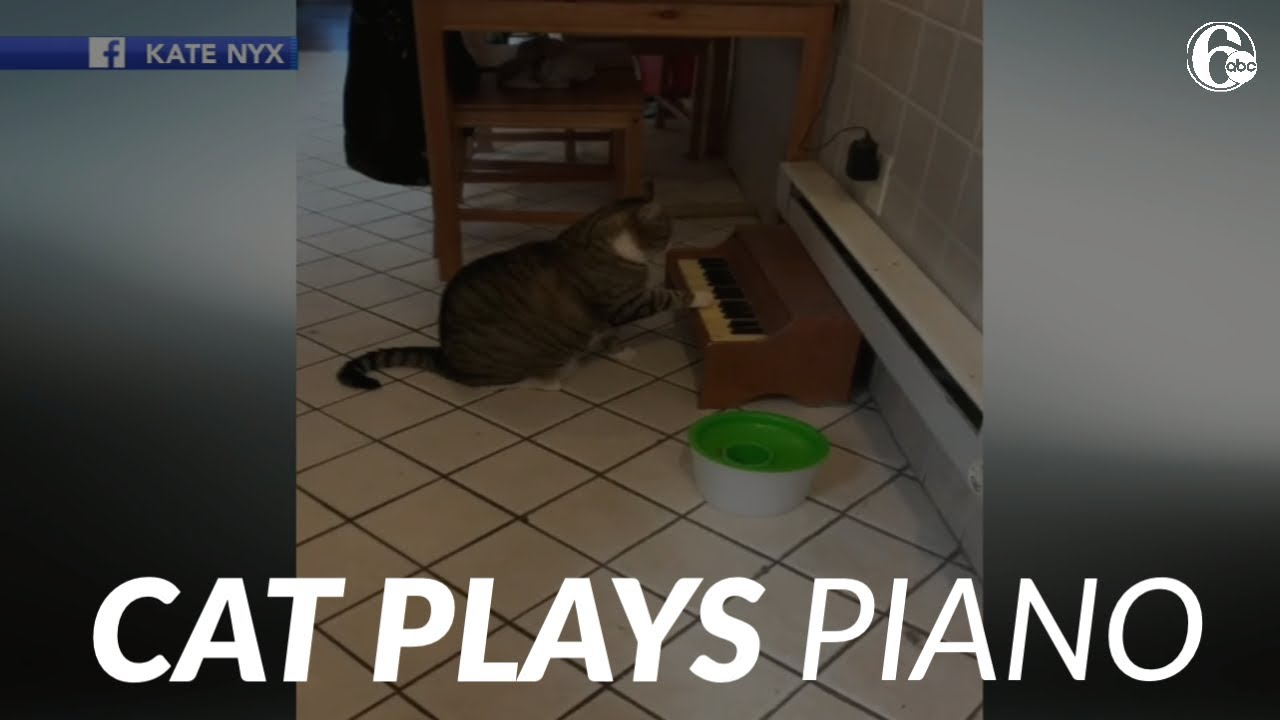 Cat plays piano to alert owners when he's hungry