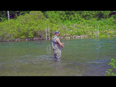 The Hunt For A 20 Inch PA Wild Brown Trout EP. 3 (Spring Creek)