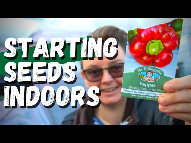 I'm starting my seeds indoors  |  grow light and heat mat germination station