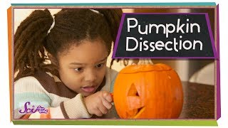 Dissect a Pumpkin!