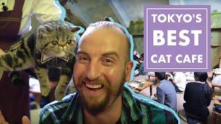 Tokyo's Best Cat Cafe