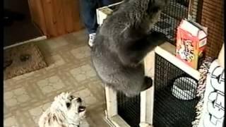 A GRIZZLY BEAR CUB Named BUMP
