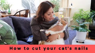 How to cut your cat's nails + Cat treatment day vlog | Ragdoll, Maine Coone