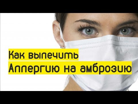 АПИТЕРАПИЯ / Как вылечить аллергию на амброзию, полынь