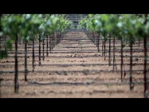 Reducing Greenhouse Gases with Vineyard Practices