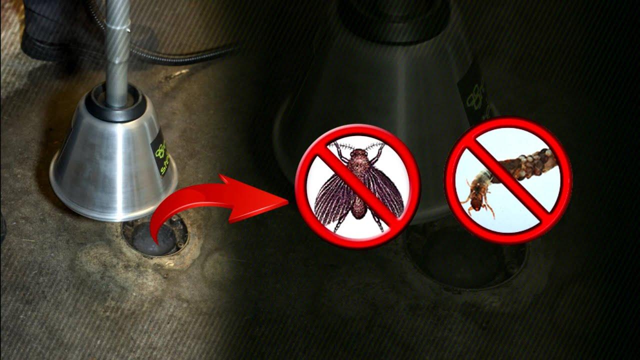 How to get rid of drain flies in bathroom - Kill Drain Flies Kill Restaurant Flies Kill Sewer Flies 1 855 Kill Flies Youtube