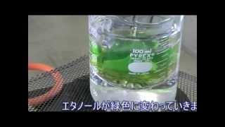 コリウス の 葉を使った 光合成の実験です。