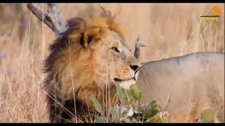 Wild Fauna / Сафари диких животных / Заповедник Ботсваны