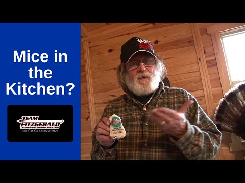 How To Get Rid of Mice in Your Kitchen | Team Fitzgerald