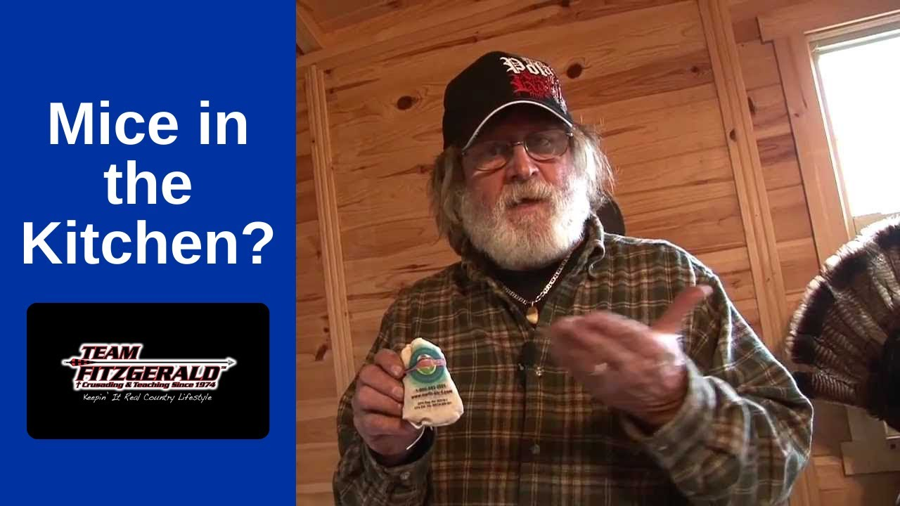 How To Get Rid of Mice in Your Kitchen | Team Fitzgerald - YouTube