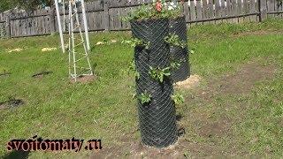 Высадка петунии в вертикальную клумбу