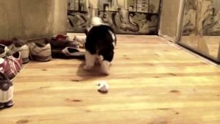 Щенок кусает за хвост крыску(, 2012-10-15T20:27:39.000Z)