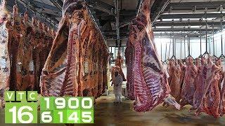 Tp.HCM sẽ xả thịt lợn dự trữ nếu khan hiếm | VTC16