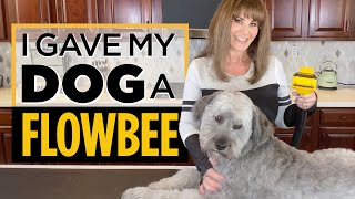 Flowbee Dog Grooming / Rescued Soft Coated Wheaton Terrier