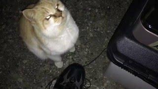 【車中泊】  豚汁作ってたら  猫に肉3分の1とられたの巻  【食事】