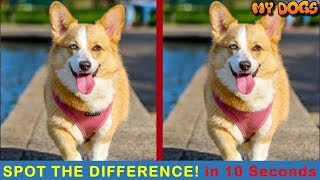Quiz Diva Spot The Difference Dog Answers