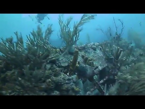 Diving the Frairs Craig Wreck in Barbados with West Side Scuba Centre