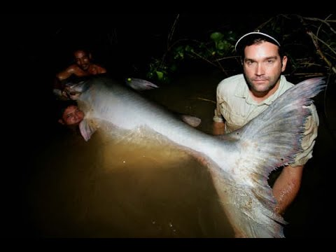 Chasing Giants With Zeb Hogan: Mekong Giant Catfish